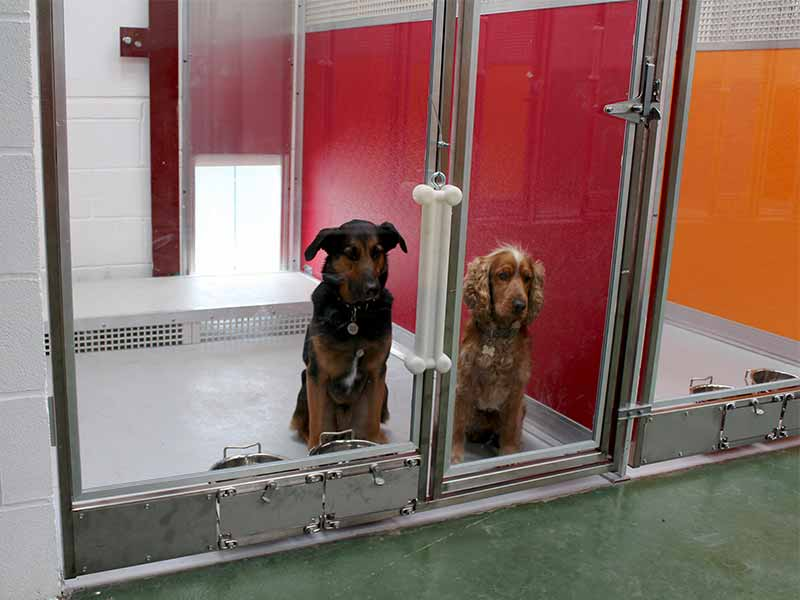 kennel accommodation